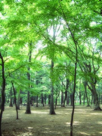 2113_樹木