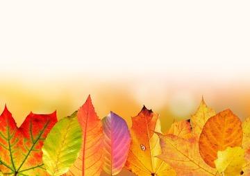 22121_autumn-1649440_1280