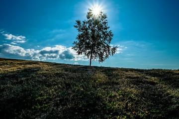 101248_一本の木