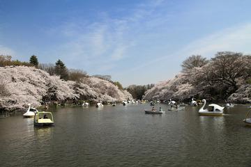 115171_mitaka_inokashira_park_in_spring_1