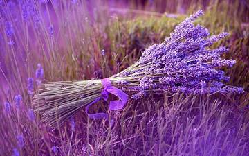 136098_wallpaper-lavender-photo-02