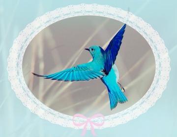 139285_青い鳥