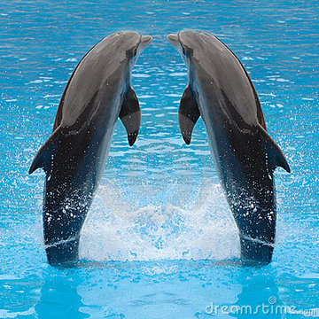 143305_jumping-dolphin-twins-2386170