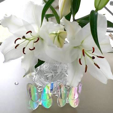 167857_crystal_lily