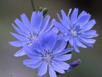 179590_flower_img01