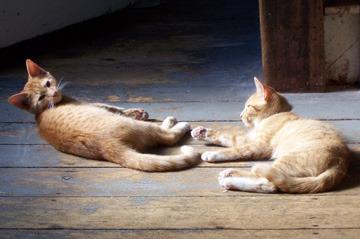 182908_kittens