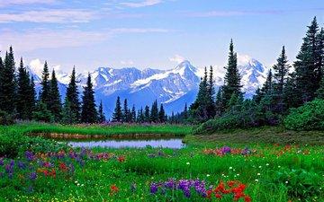 183076_山と花畑