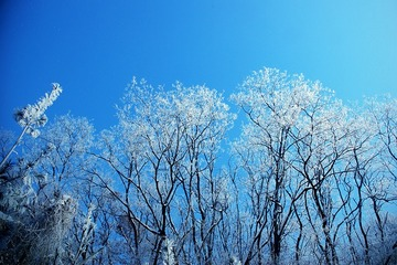 238066_winter-tree-583675_640