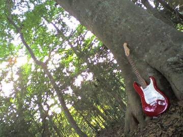 33508_木とギター