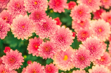 432387_flowers-summer-pink-nature-47360