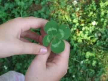 61149_カバー写真_済_four-leaf-clover_2565238