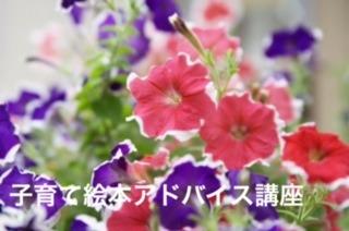 76789_8月_アサガオ