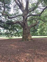 81404_御苑の木