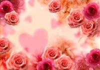 1586_flower-back1098