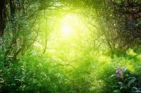 287_森の光