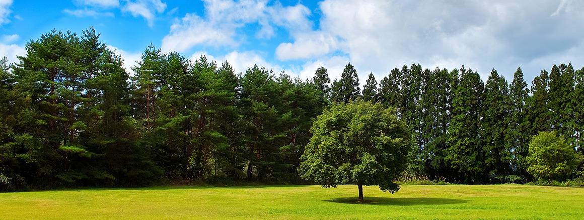 461_tree_woods_00003-20160516
