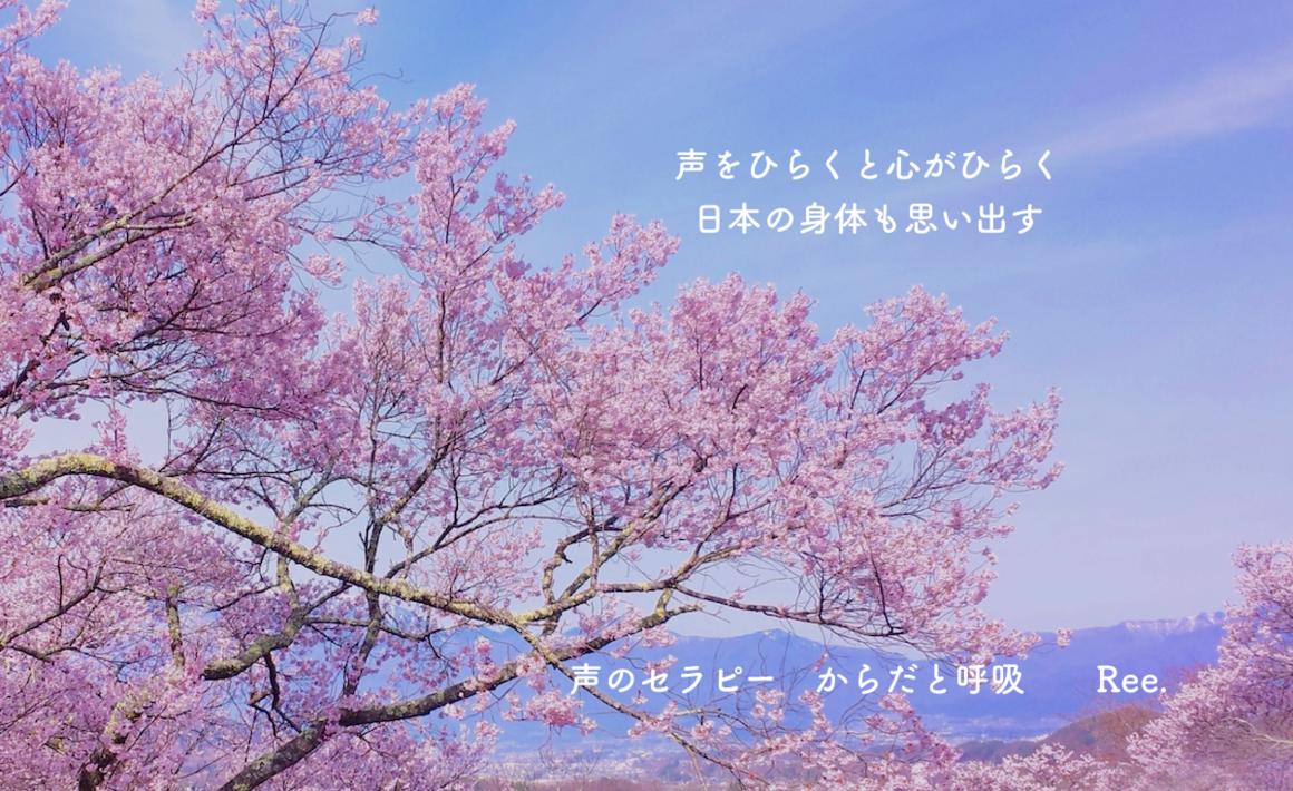 5065_桜