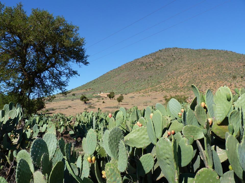 7273_pricklypear02