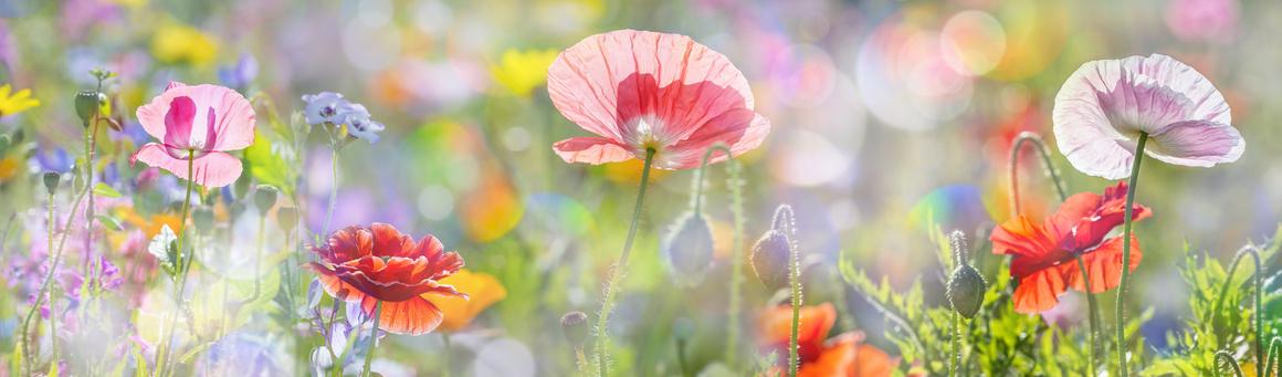 9981_top-flower